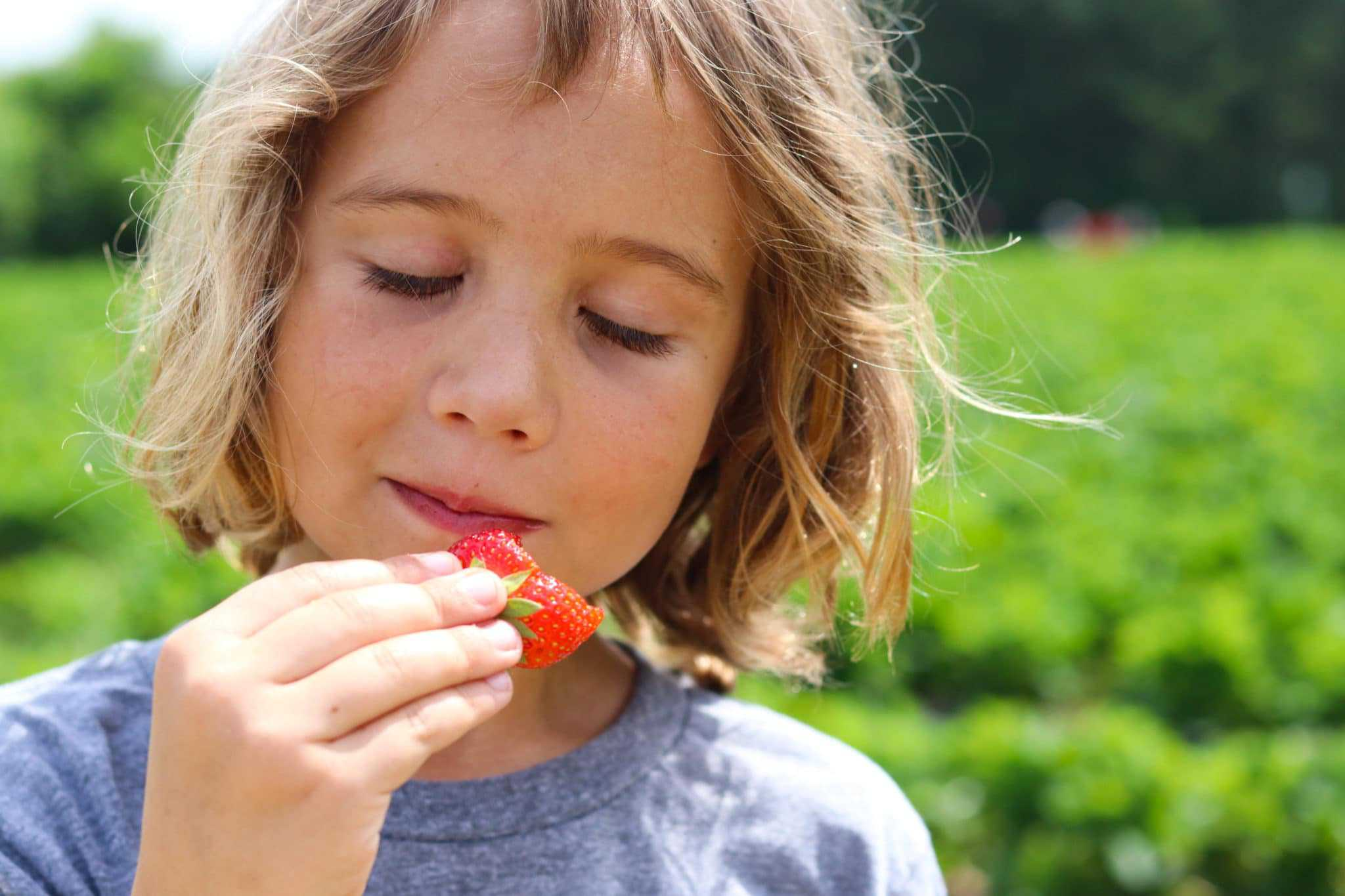 Boy eating strawberries at Hall Family Farm