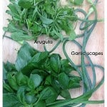 Arugula, Basil, and Garlic Scapes for Pesto