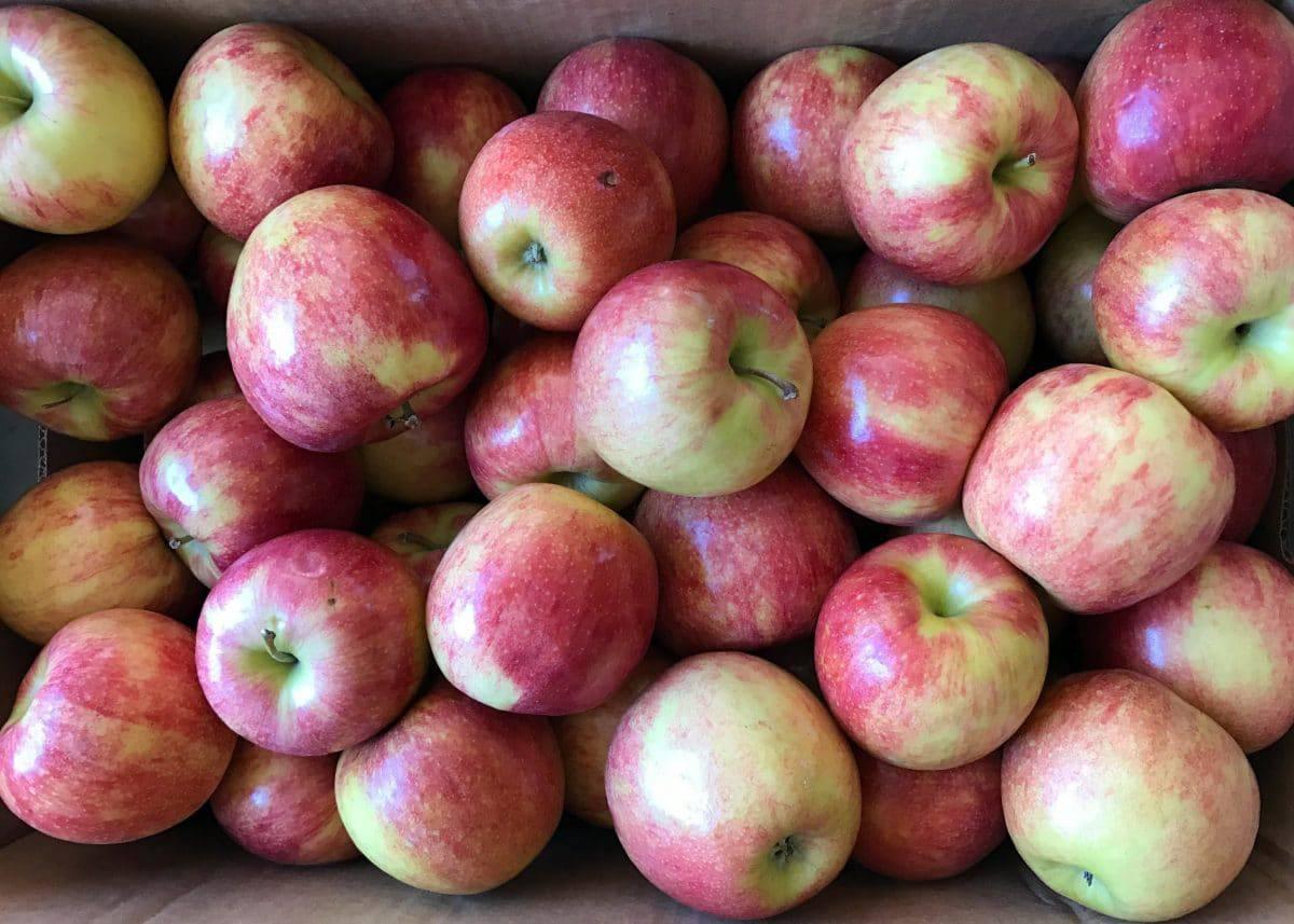 Oven Dried Apple Chips || Erin Brighton | gluten free | vegan | Whole30 | snacks